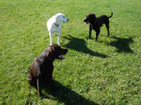 Marlee, Josie and Murphy