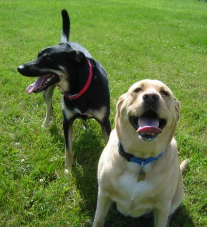 Cleo (Mix) & Nugget (Labrador Retriever)